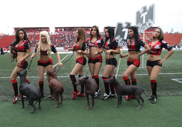 cheerleaders with dogs